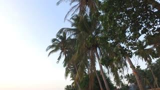 palm trees on sunset