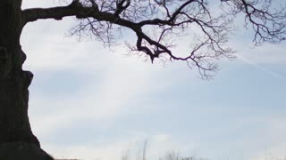 silhouette of a cyclist riding under a big tree