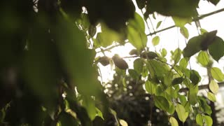 sun rays in tropical trees in greenhouses