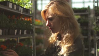woman chooses flowers in a garden plant store