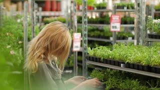 woman chooses garden plants in the store