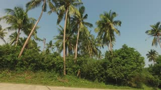 woman runs around the tropical road among the palms