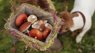 Woman Carries a Basket With Mushrooms in the Forest