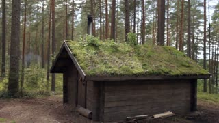Wooden House With a Green Roof in the Forest