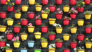 Plenty of colorful pots of flowers on the wall.