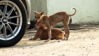 virus attack dog, Close up street dogs looking for camera.