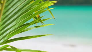 Palm Leaf Detail. Close up footage of a tropical palm tree leaf in a slight breeze and blurred blue ocean waves moving in background