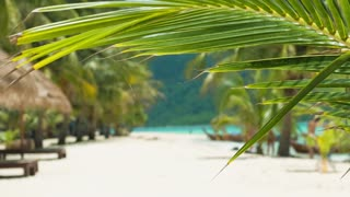 Tropical palm tree leaf in a slight breeze and tropical sandy beach in background