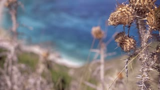 Wild Dry Thorn to Sea on Petani Beach Kefalonia Greece