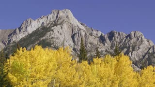 Autumn Aspen Trees and Rocky Mountains 01