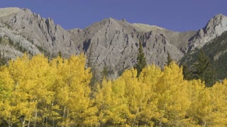 Autumn Aspen Trees in the Rocky Mountains 02