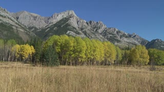 Autumn Trees and Rocky Mountains 11
