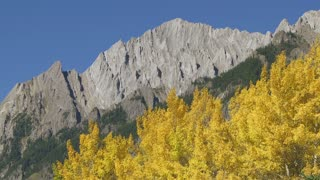 Autumn Trees and Rocky Mountains, Banff, Alberta, Canada 04