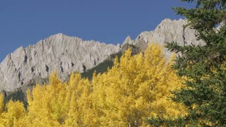 Autumn Trees and Rocky Mountains, Banff, Alberta, Canada 06