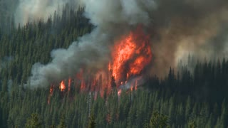 Huge flames and smoke of a forest wildfire