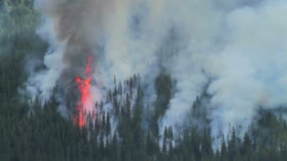 Large flame and smoke of a forest fire
