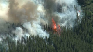 Large flames and smoke of a forest fire