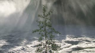 Sun shining down through water mist and small tree