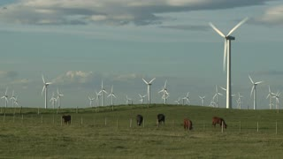 Wind farm turbines and cattle on ranch in Alberta, Canada