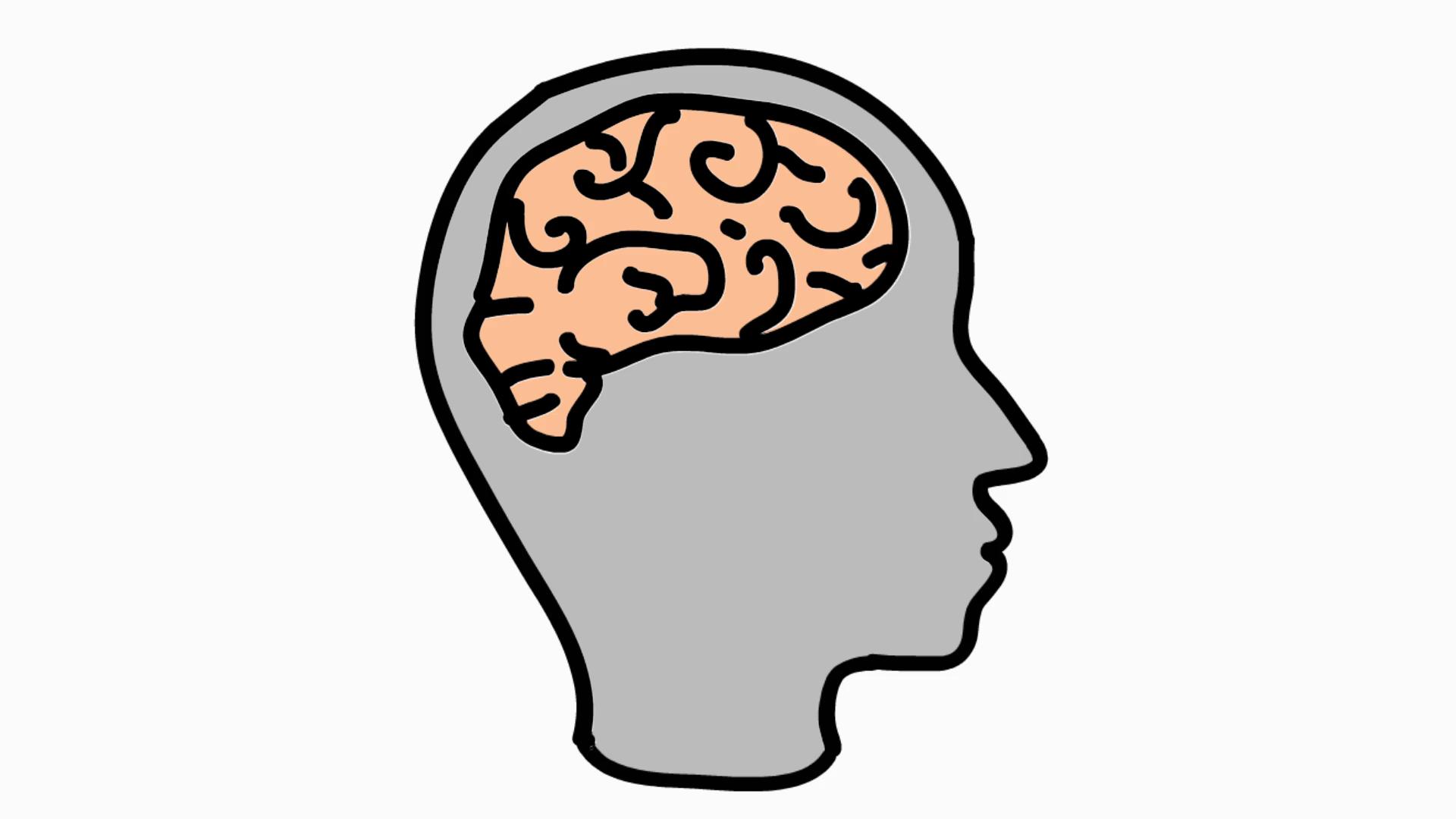 Human Brain Cartoon Illustration Hand Drawn Animation Transparent Motion Background Storyblocks