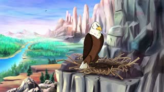 Bald Eagle Perched on Rock.