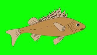 Big Fish Ruff Swimming