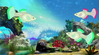Colorful Aquarium Fish swimming  in fish tank. Handmade animation in UHD.