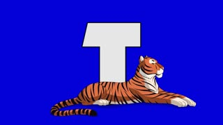 Letter T and  Tiger (foreground)	Animated animal alphabet. Motion graphic with chroma key. Animal in a foreground of a letter.