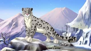 Snow Leopard - irbis
