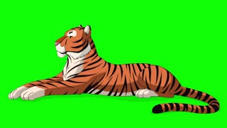 Big Tiger Lies and Growls Chroma Key