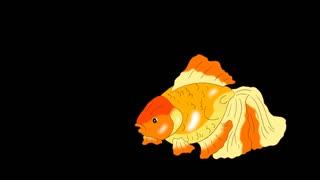 Goldfish Floating in Aquarium Alpha Matte