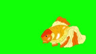 Goldfish Floating in Aquarium Chroma Key