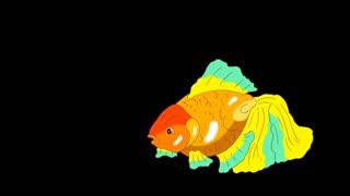 Multicolored Goldfish Floating in Aquarium Alpha Matte