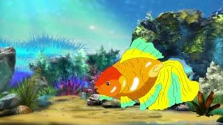 Multicolored Goldfish Floating in Aquarium