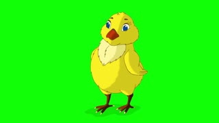 Yellow Chicken Bows Chroma Key