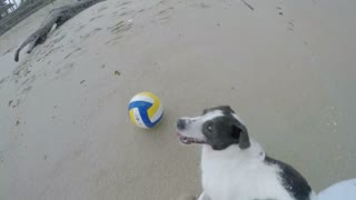 4K. Adorable Dog Playing with Ball on the Beach