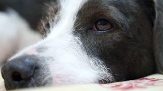 Beautiful Female Puppy Dog Closeup Portrait