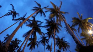 Beautiful Tropical Landscape - Palm Trees at Night Sky. Timelapse.