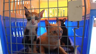 Cats in a Cage in Veterinary Clinic