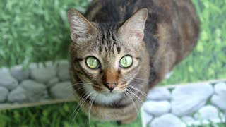 Close-up of Cat with Green Eyes Looking in Camera
