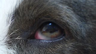 Close-up of Dog's Eye