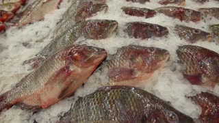 Closeup of Fresh Fish on Ice in Fish Market