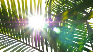 Closeup on Green Palm Leaves with Sun. Slow Motion.