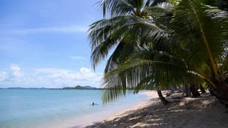 Coconut Palm Tree on the Sandy Beach of Tropical Island