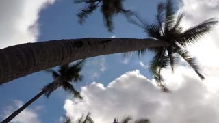Coconut Palm Trees Against Blue Sky. Timelapse.