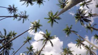 Coconut Palm Trees against Blue Tropical Sky. Time Lapse.