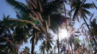 Coconut Palms and Grass against Blue Sunset Sky