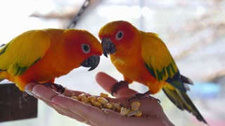 Colorful Parrots Sitting and Eating on Human Hand
