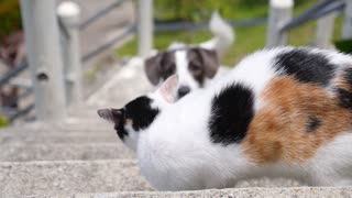 Conflict Between Dog and Cat Outdoors. Funny Animal Quarrel