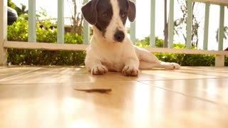 Curious Cute Dog Hunting on Little Gecko.